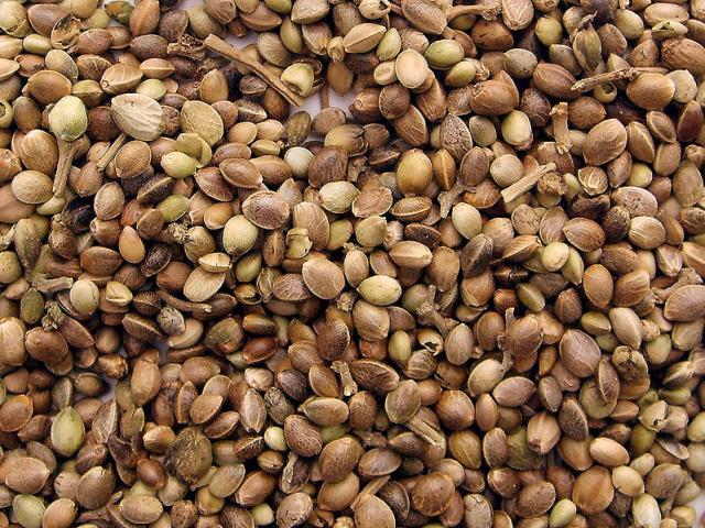 Hemp Seeds Bulk