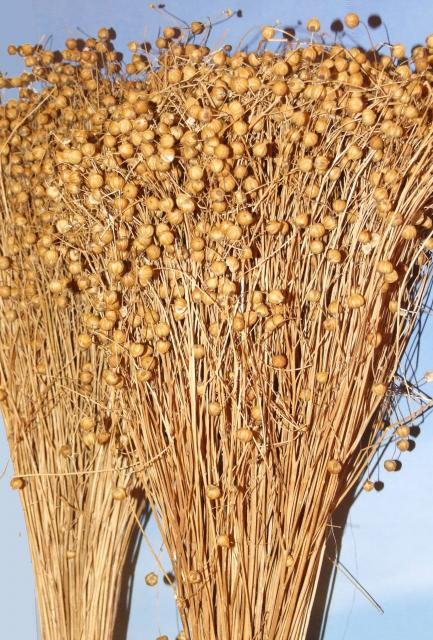 recipe: linseed meaning in gujarati [4]