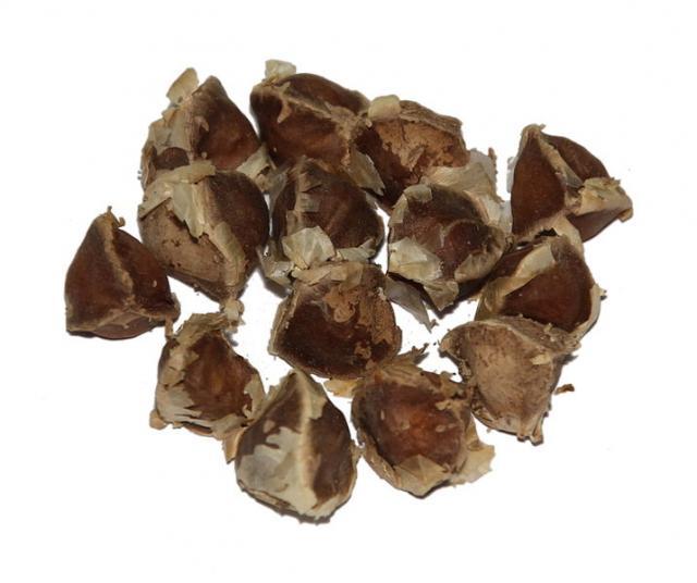 Moringa (Moringa oleifera) | Feedipedia