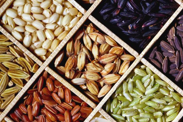 Rough Rice Paddy Rice Feedipedia
