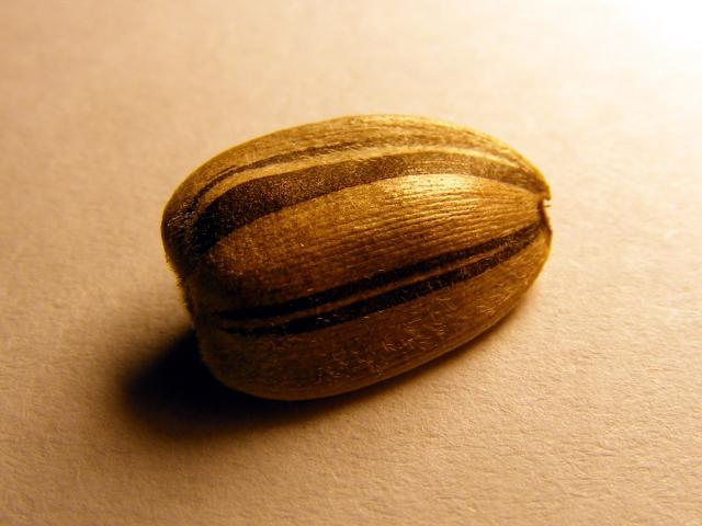 Sunflower seeds | Feedipedia