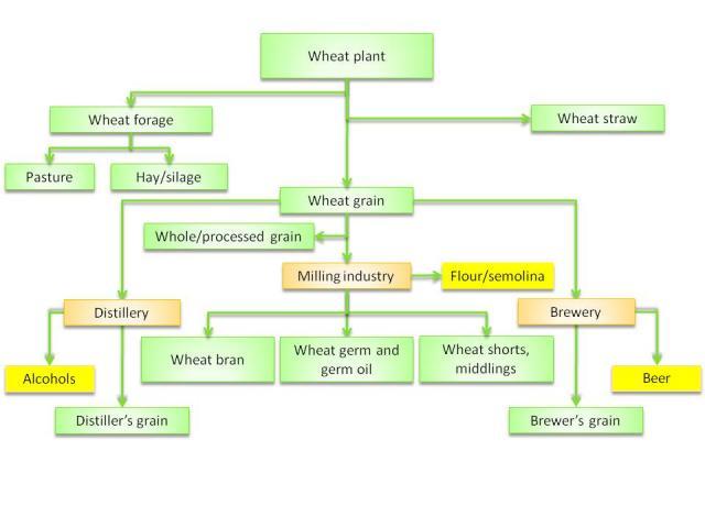 Wheat Products Feedipedia