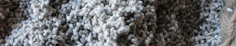 https://www.feedipedia.org/content/bag-cotton-seeds-cattle