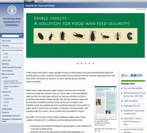 FAO, 2013. FAO Forestry
