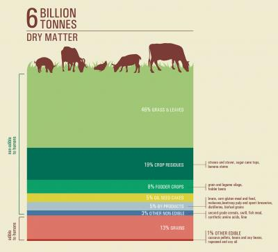 Feed infography, FAO