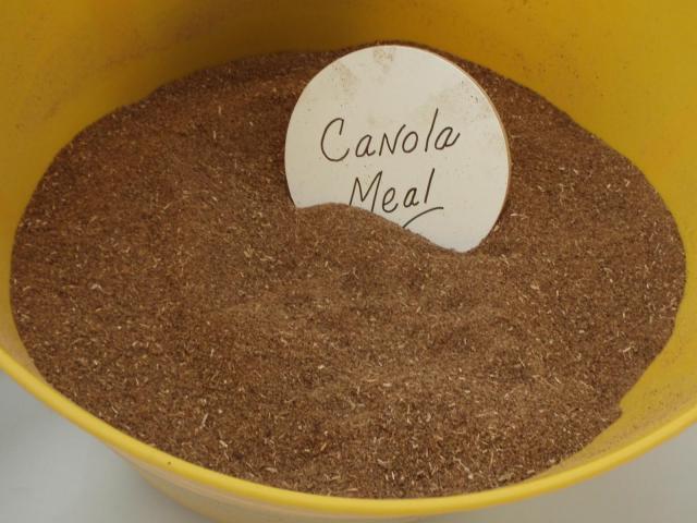 Canola meal, Canada