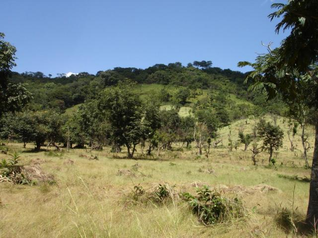 Fonio fields on plain and slopes in Fouta Djalon