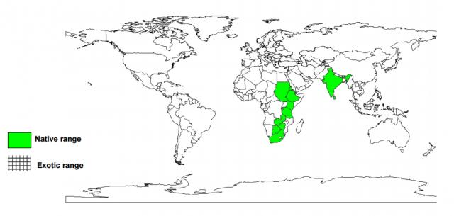 Albizia (Albizia amara), worldwide distribution