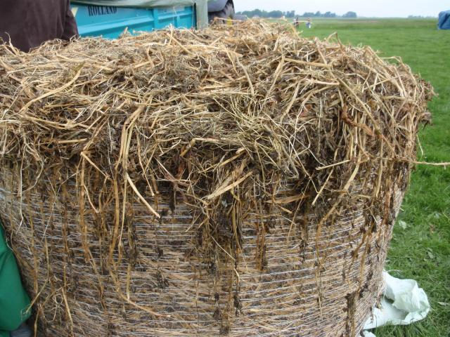Alfalfa silage, France