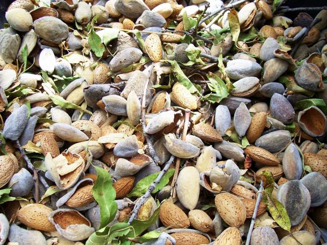 almond hulls, shells, leaves, and twigs