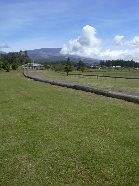 Blanket grass (Axonopus compressus), sward, Maui, Hawaii