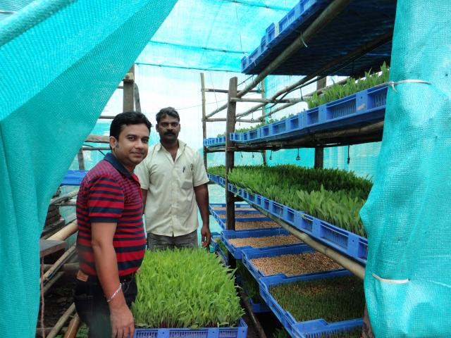 Hydroponic fodder production: A critical assessment | Feedipedia