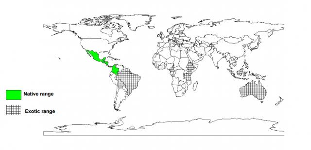 Calliandra (Calliandra calothyrsus), worldwide distribution