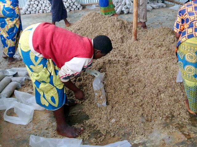 Cottonseed hulls for mushroom production
