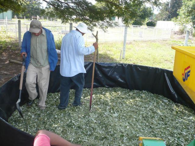 Processing of cratylia (Cratylia argentea) for silage, Nicaragua