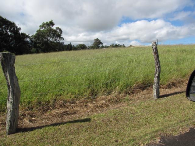 Pangola, habit and pasture at Haiku, Maui