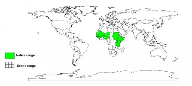 Worldwide distribution of Combretum aculeatum
