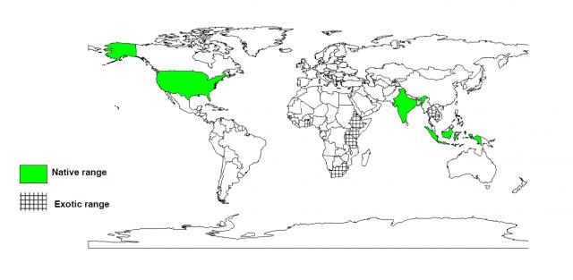 Ceiba pentandra distribution