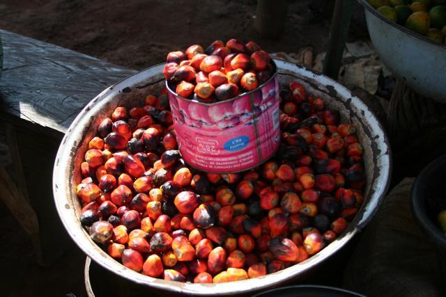Oil palm (Elaeis guineensis) fruits, Burkina Faso