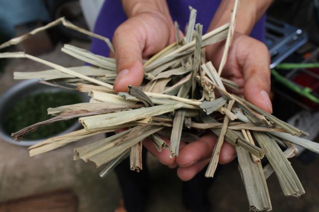 Elephant grass (Pennisetum purpureum), dried