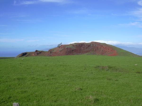Kikuyu (Pennisetum clandestinum), general view, Hawaii
