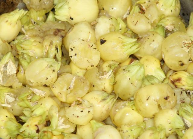 Mahua (Madhuca longifolia), fruits, India