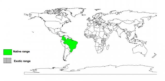 Worldwide distribution of Manihot glaziovii