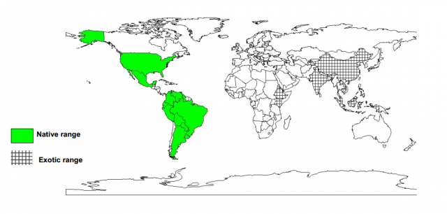 Worldwide distribution of Pithecellobium dulce
