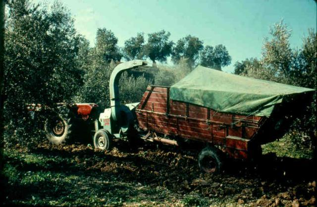 Olive forage chopping machine, Andalusia, Spain