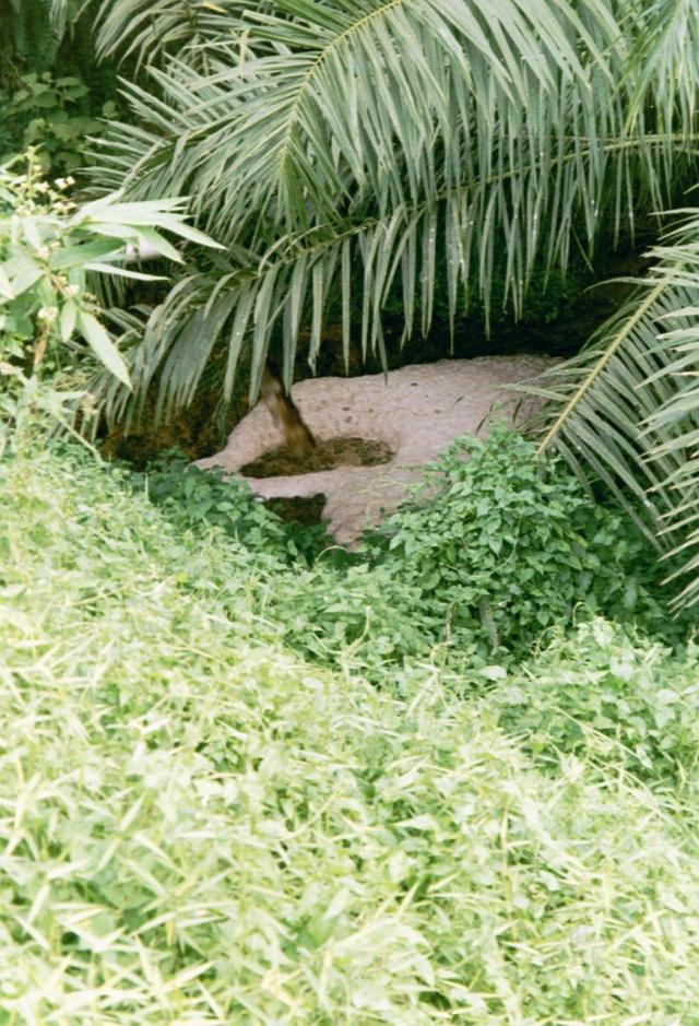 Palm oil mill effluent