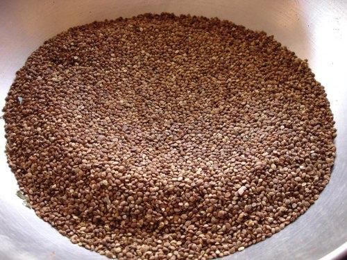 Grains of kodo millet (Paspalum scrobiculatum)