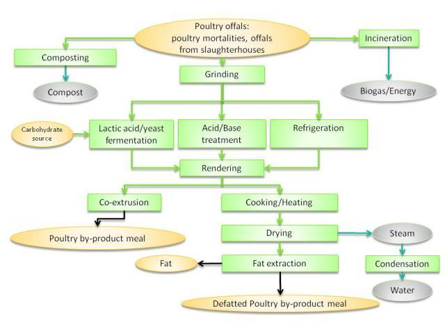 Poultry by-products meal: processes