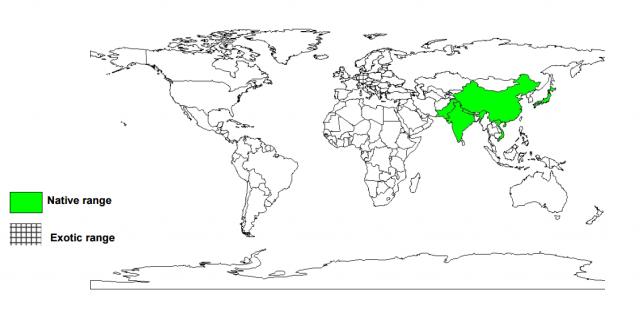 Blue Japanese oak (Quercus glauca), worldwide distribution