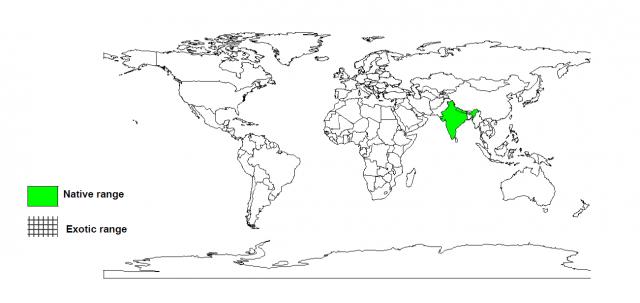 Sal (Shorea robusta) native distribution
