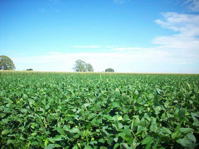 Soybean field, Argentina