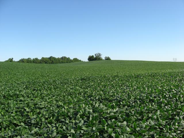 Soybean field, Ohio