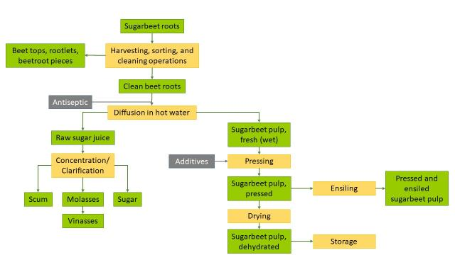 Sugar beet processing