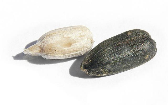 Sunflower seeds, decorticated (left) and undecorticated (right)