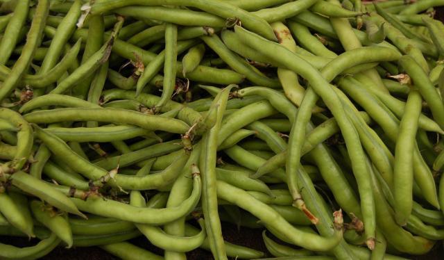 Faba bean pods (Vicia faba)