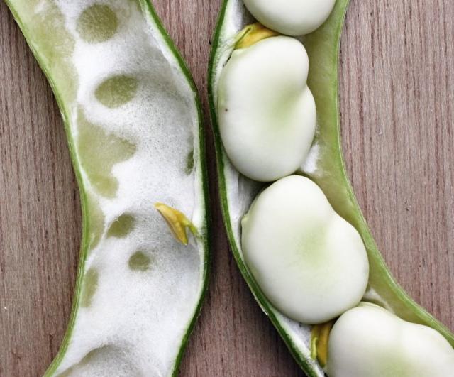 Faba beans (Vicia faba)