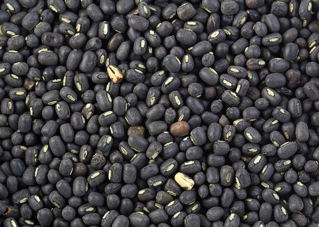 Black gram (Vigna mungo) seeds