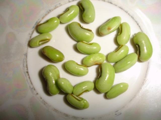 Barbatti seeds, urban region of Raipur, Chhattisgarh (India)