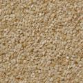 Sesame (Sesamum indicum) seeds