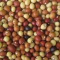 Bambara groundnut (Vigna subterranea), seeds