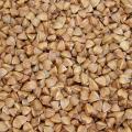 Buckwheat (Fagopyrum esculentum) grain