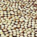 Coconuts (drying), Kerala, India