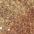 Fonio (Digitaria exilis) grain