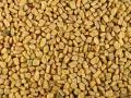 Fenugreek (Trigonella foenum-graecum), seeds