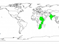 Albizia (Albizia amara), worldwide distribution