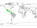Calliandra (Calliandra calothyrsus), worldwide distribution